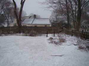 Backyard at start of storm, noon on February 8, 2013