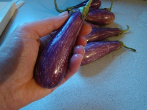 Fairy Tale Eggplant: So tiny, aren't they cute?