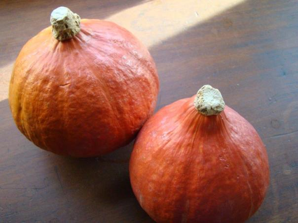 Red Kuri Squash